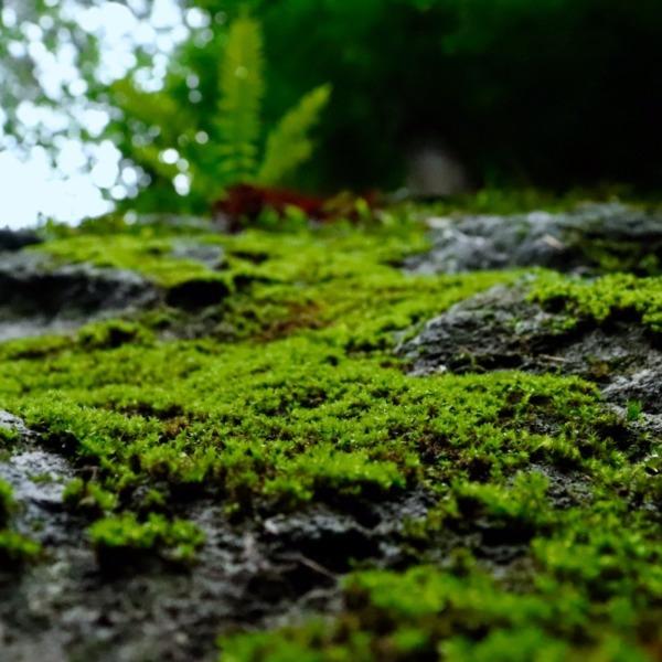 小さな自然