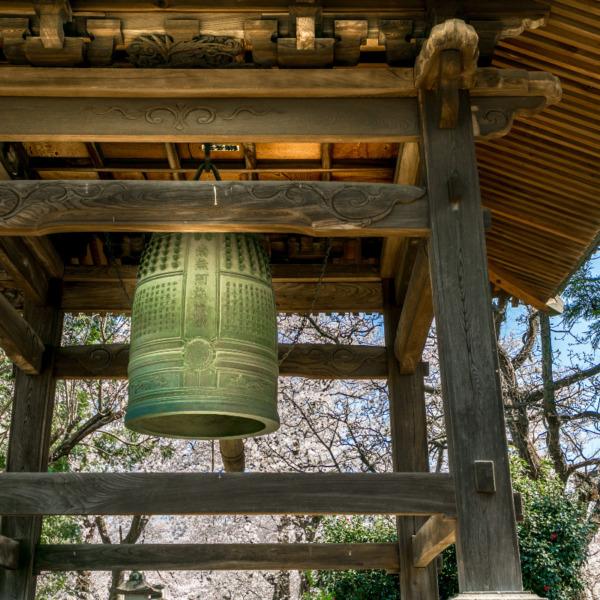 鴻巣 勝願寺の鐘つき堂と桜