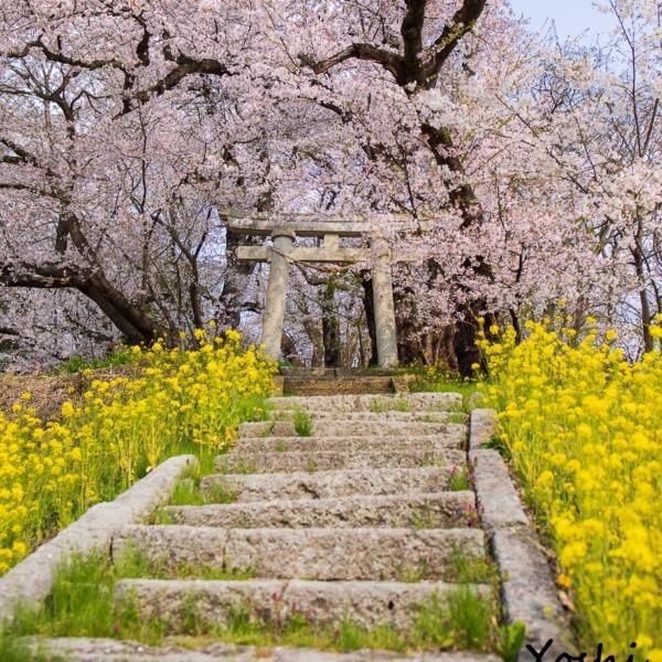 鎮守森の春