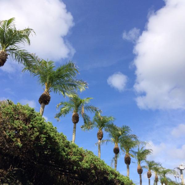 島の空とロベ