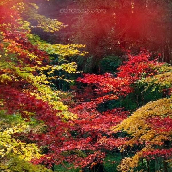 遠州の紅葉