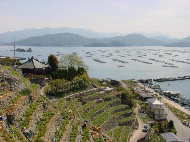 段畑と漁場