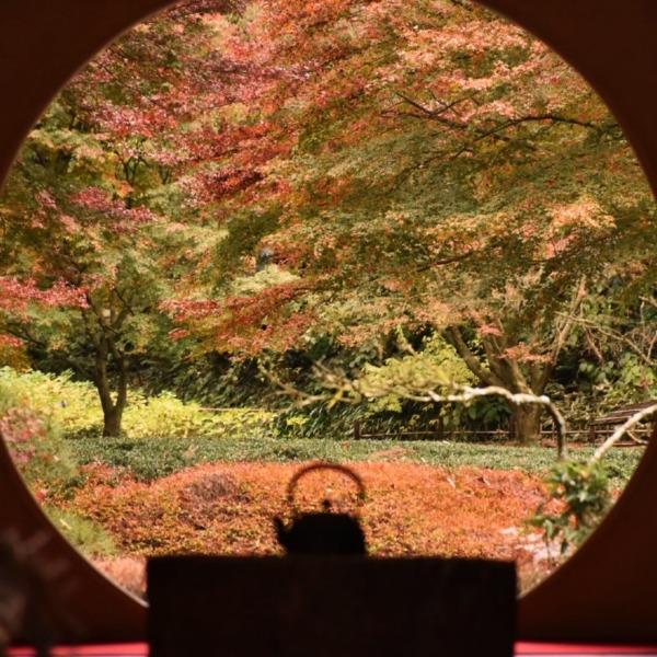 鎌倉  明月院 秋の丸窓