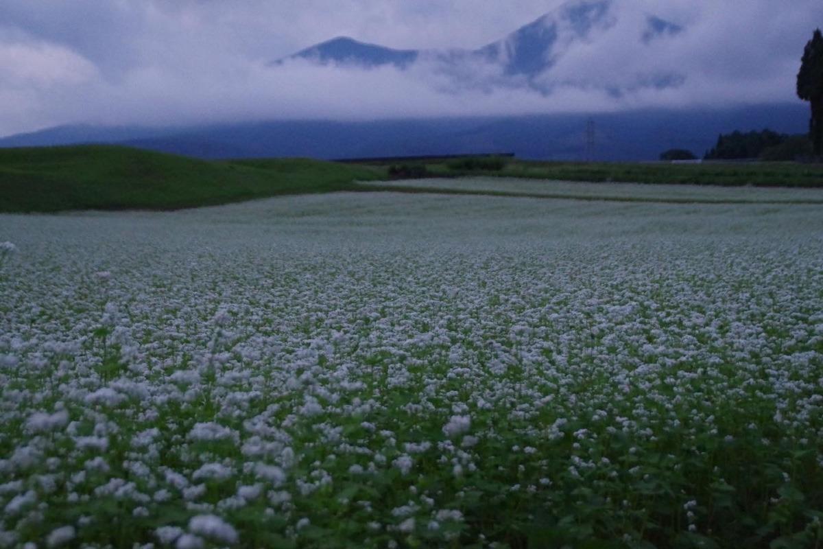 「蕎麦の花と八ヶ岳」