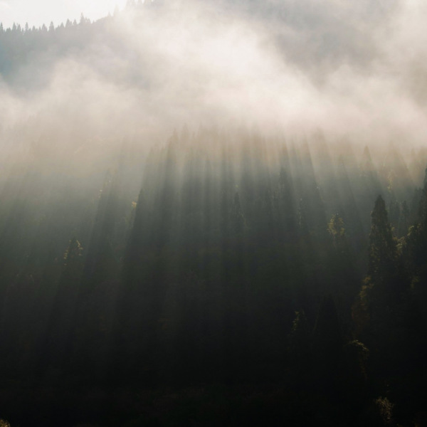 九頭竜湖の朝靄