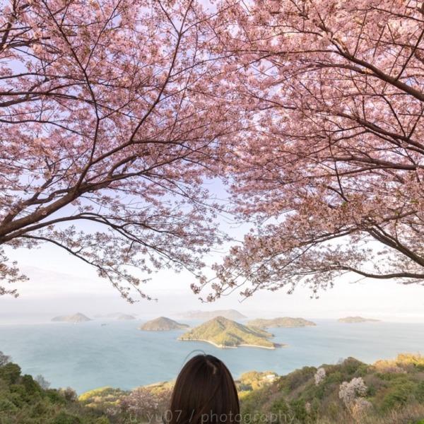桜をながめて