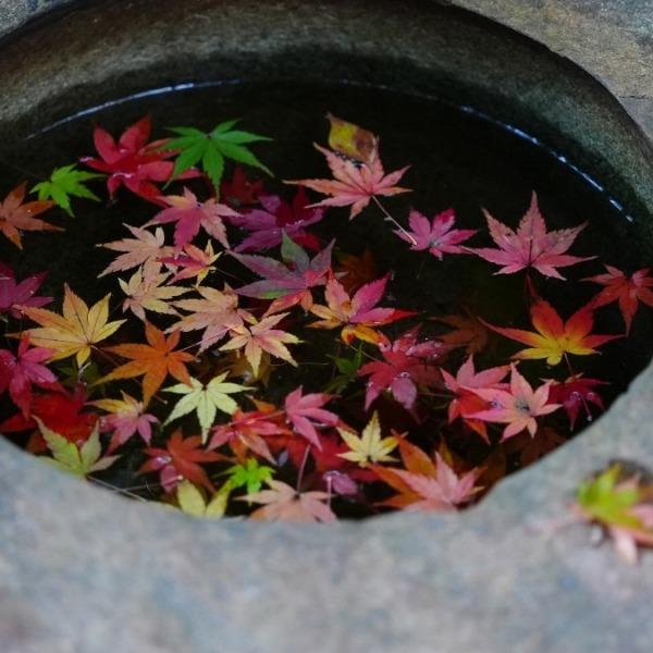 手水鉢✨:旧古河庭園の紅葉2020
