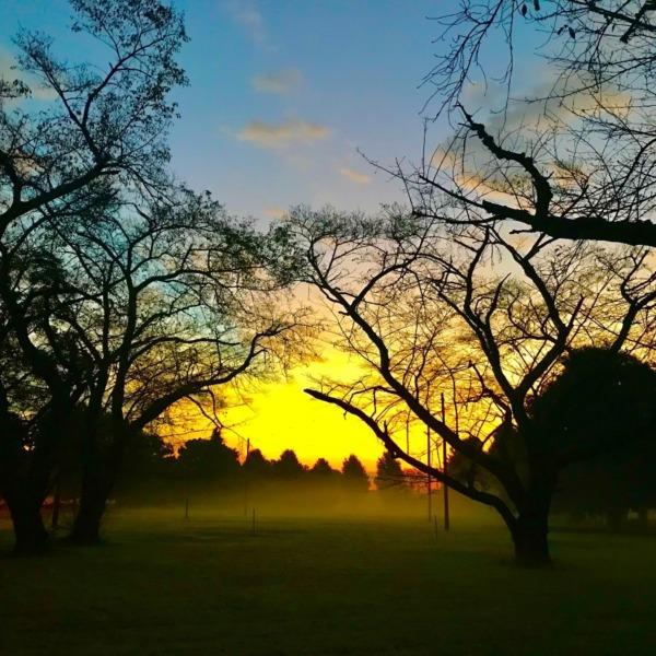 朝日が描く影絵