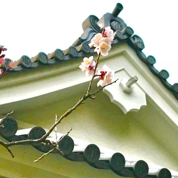 大手門櫓の梅