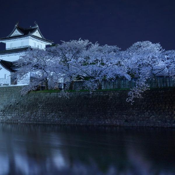 新発田城夜桜