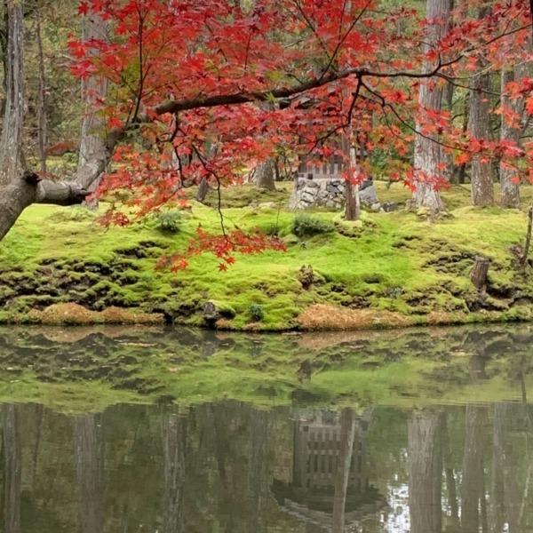 苔寺の紅葉