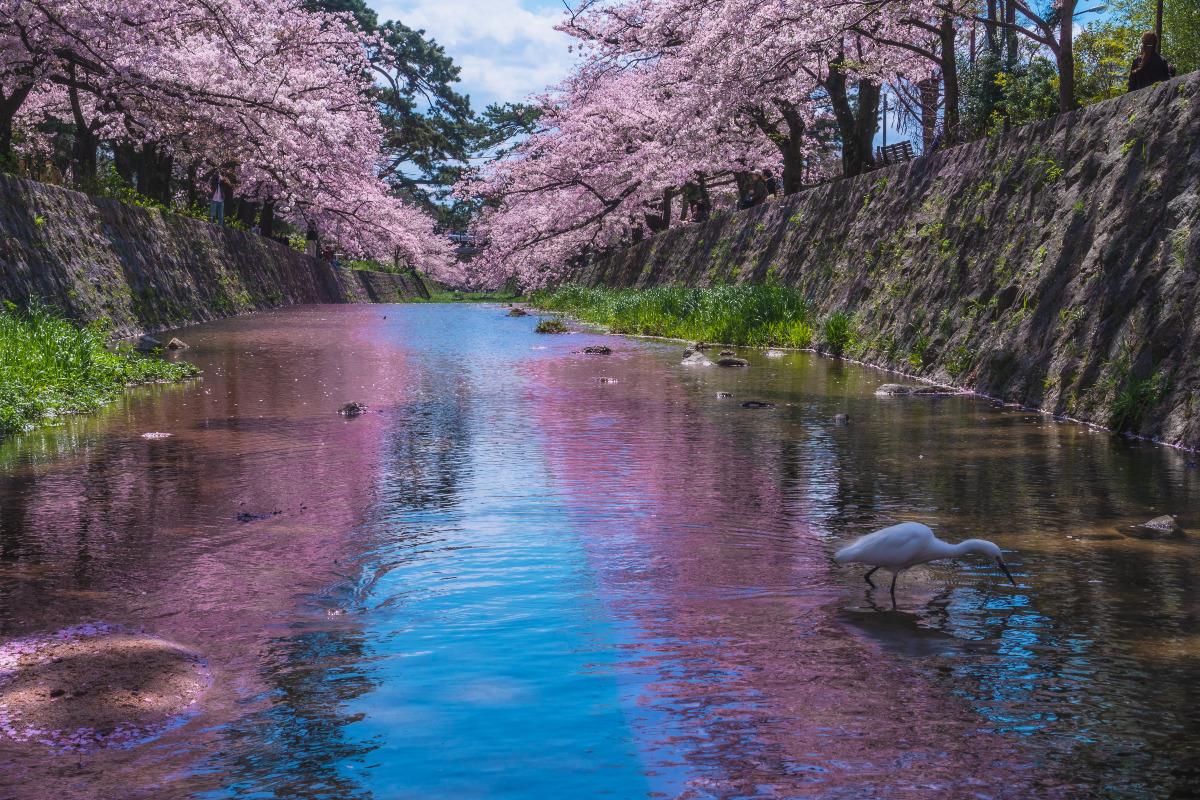 西宮 夙川公園