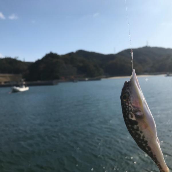 三陸リアスの漁港