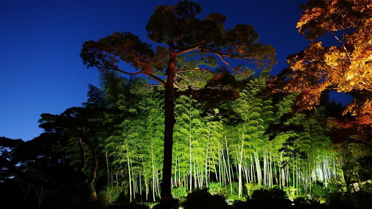 昭和記念公園内/日本庭園紅葉:竹林コラボ✨