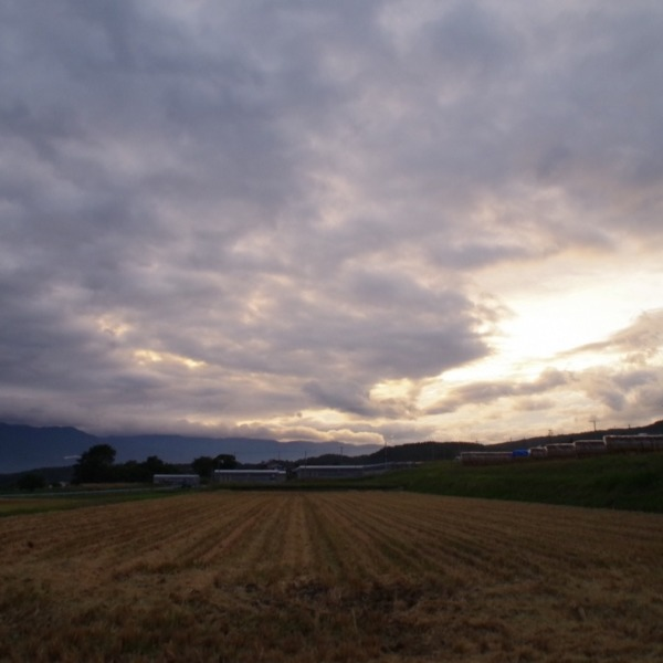 「稲刈りが終わった田んぼと夕空」