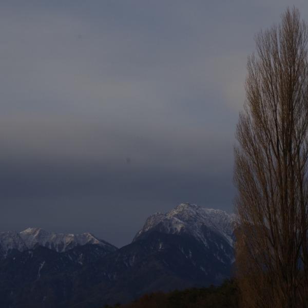 「ポプラの木と甲斐駒ヶ岳」