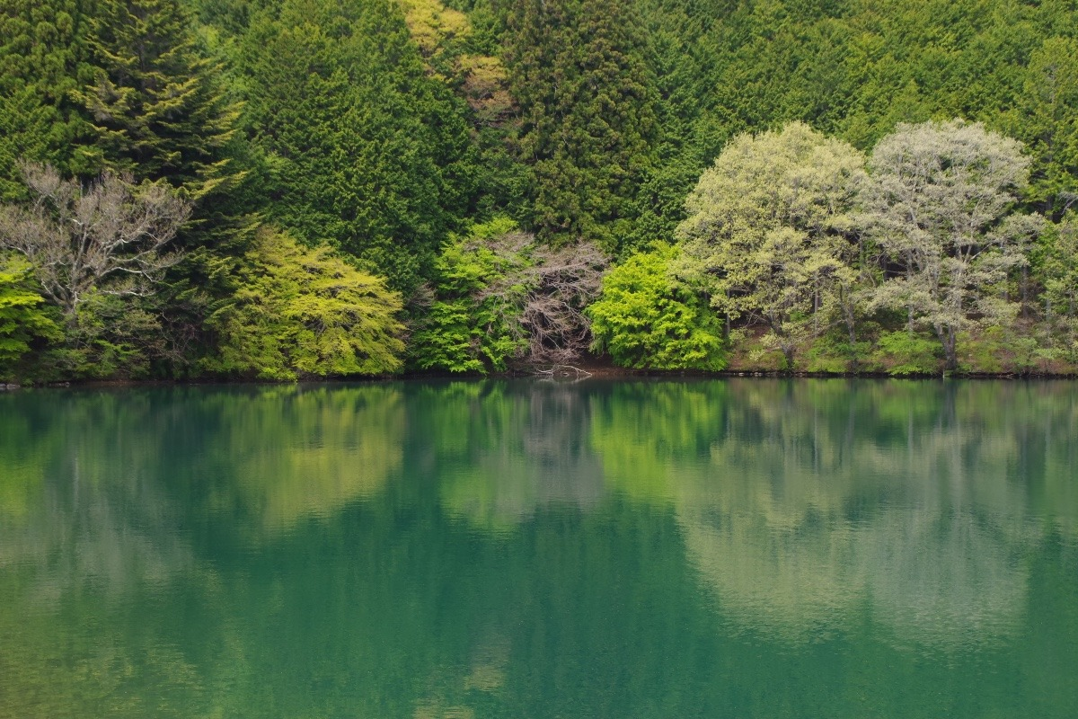 「南伊奈ヶ湖の新緑」