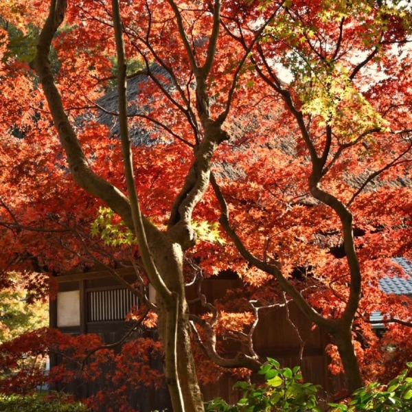 長寿寺の紅葉 3