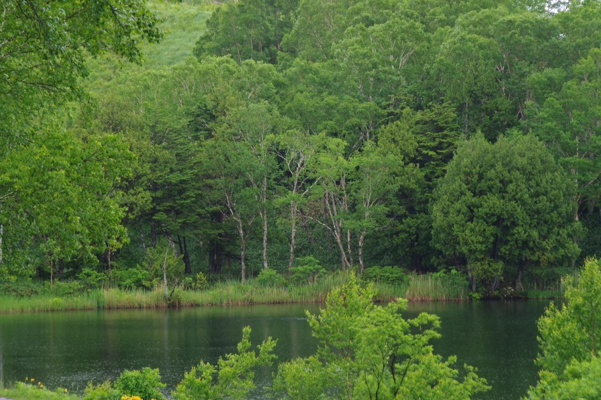 「木戸池」