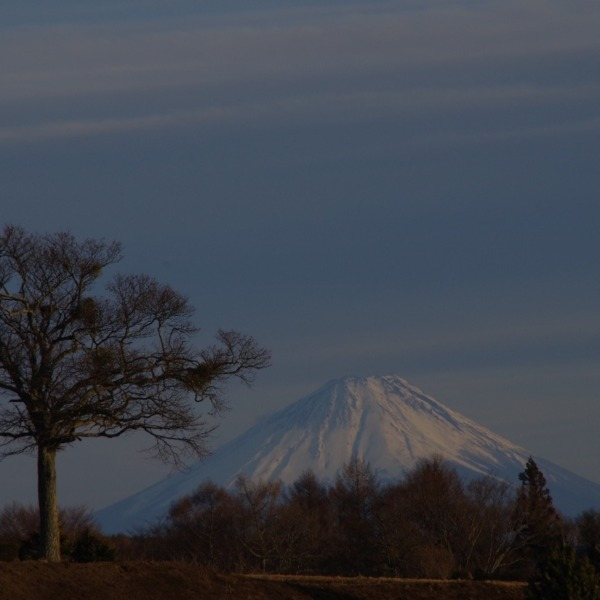 「独立樹と富士山の遠景」