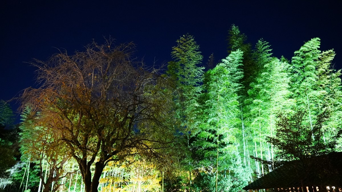 昭和記念公園内/日本庭園:竹林の輝き✨