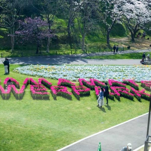 浜松フラワーパークの桜 13