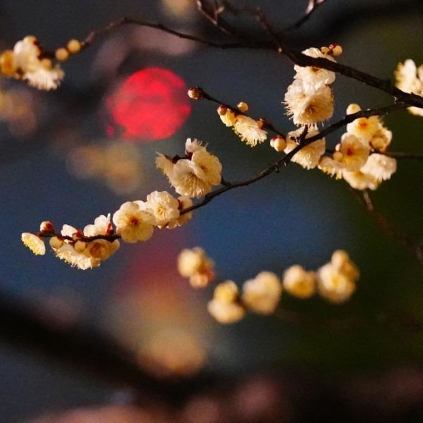 銀世界の梅2021彩💖/希望の灯り_東京タワー💖