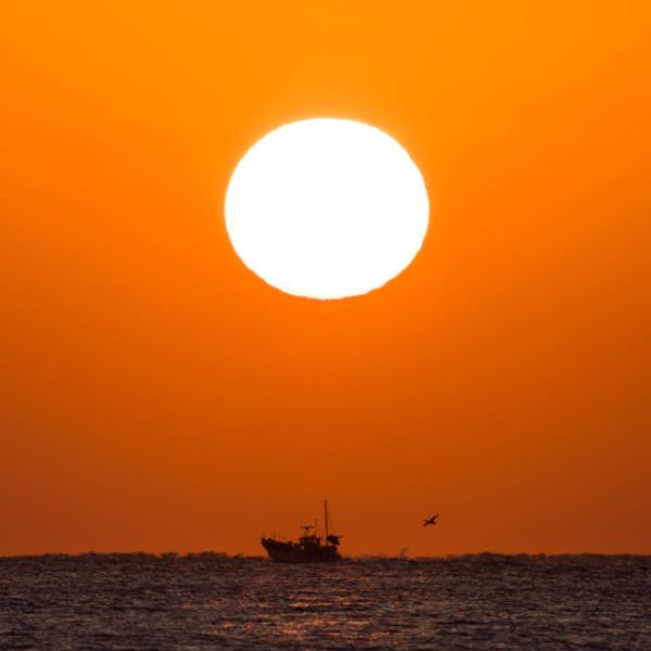 朝日と漁船と海鳥