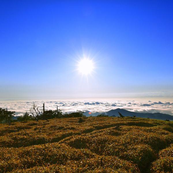 大台ヶ原と太平洋上の雲海