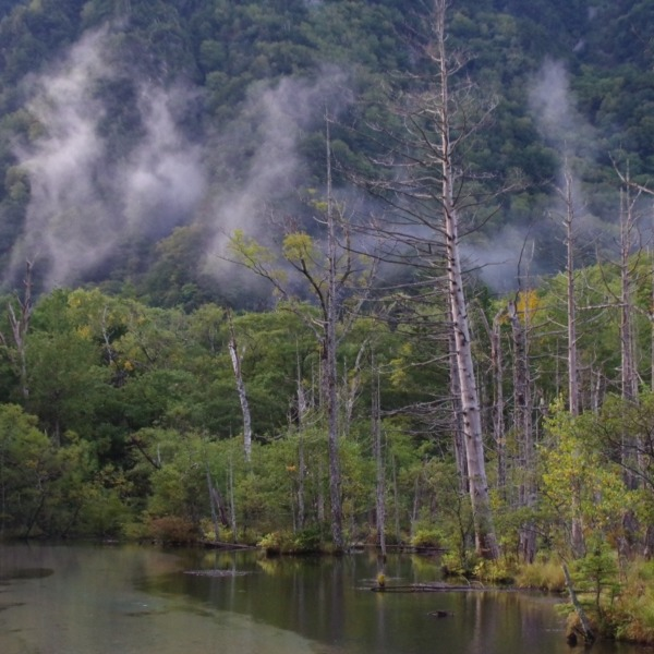 「湿原の朝」