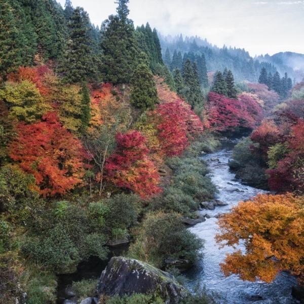 名倉川の紅葉