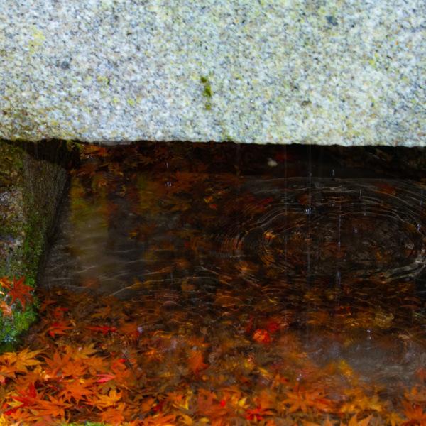 手水舎の中の紅葉🍁