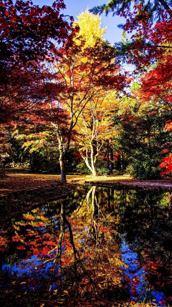 土岐市曽木公園紅葉