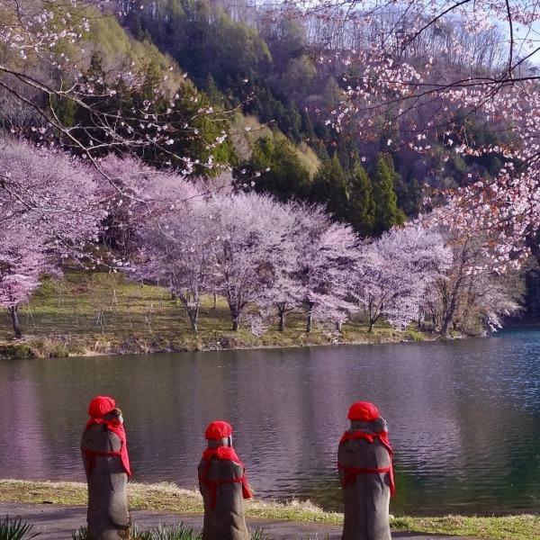 中綱湖畔の桜を見つめるお地蔵様三人衆