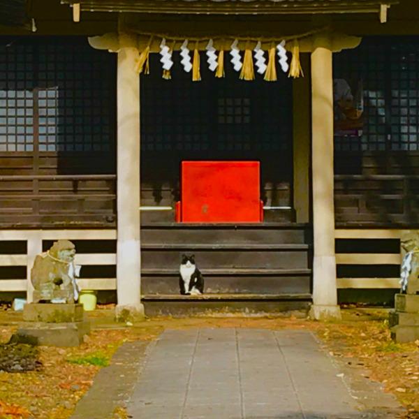 賽銭箱の守猫