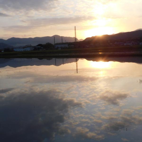 水鏡/朝日と田んぼ