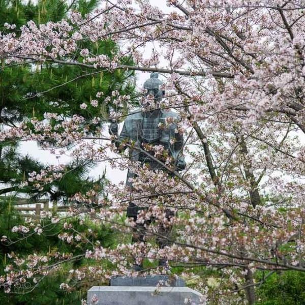 浜松城の桜 2