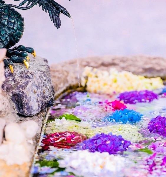 手水舎紫陽花