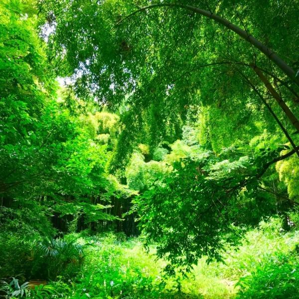 雑木林の木漏れ日
