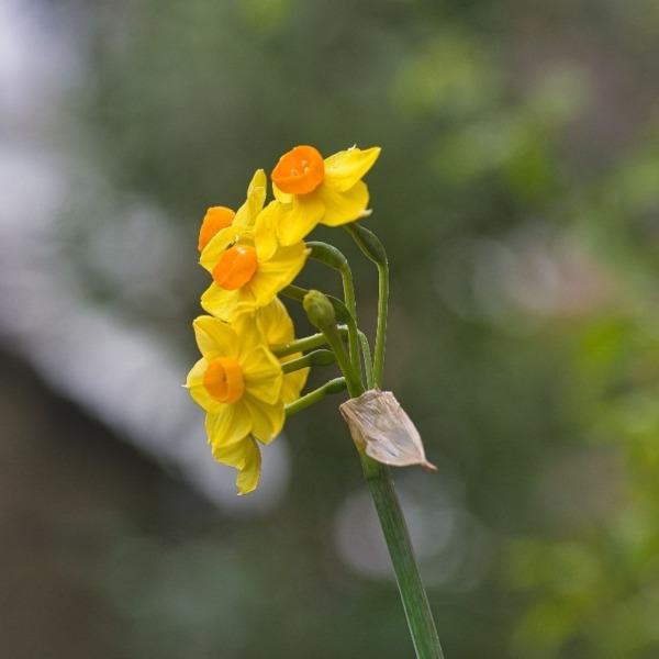 ―我が家のお花―