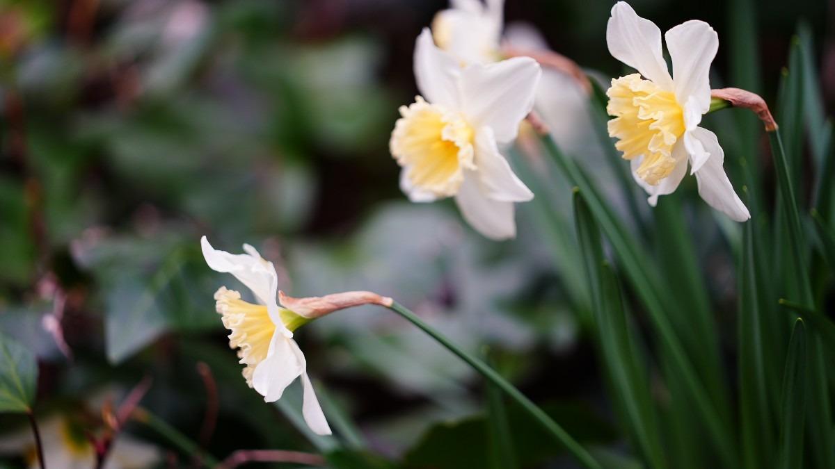 春が来た2021✨/日比谷公園