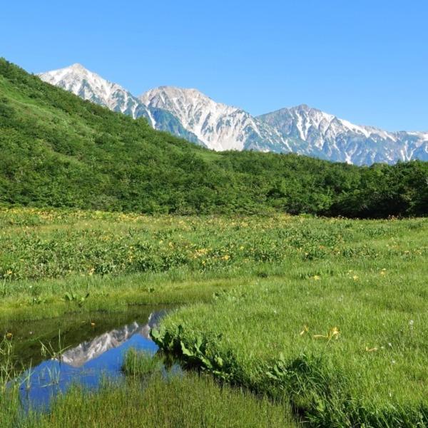 鎌池湿原の地塘に映り込む白馬鑓ヶ岳
