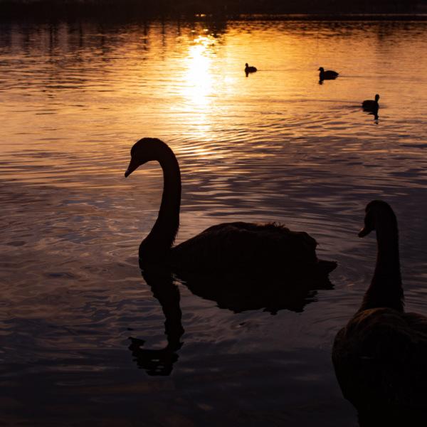 夕焼けの上野沼