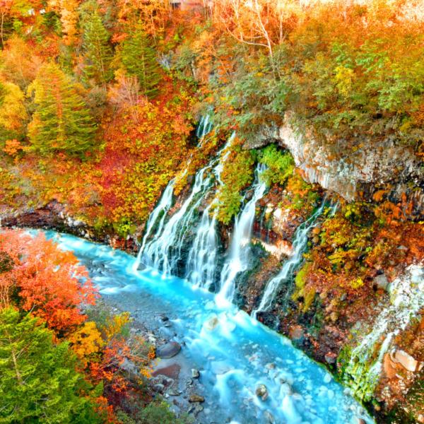 色彩豊かな白ひげの滝