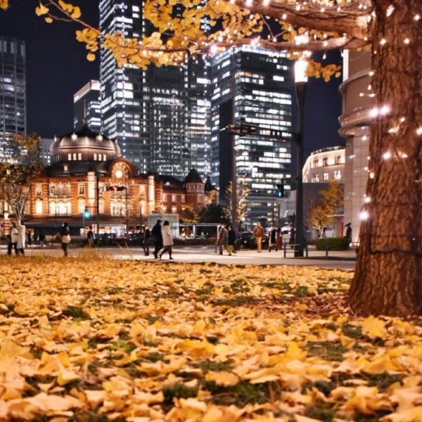 イチョウと東京駅の夜景