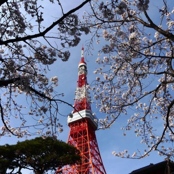 桜の合間から