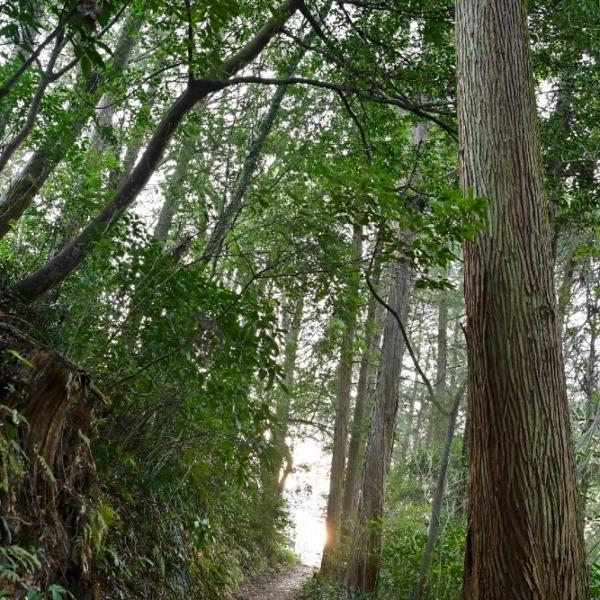 関之尾滝 遊歩道にて