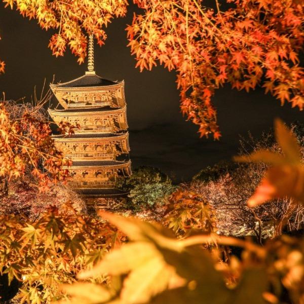 京都東寺ライトアップと紅葉