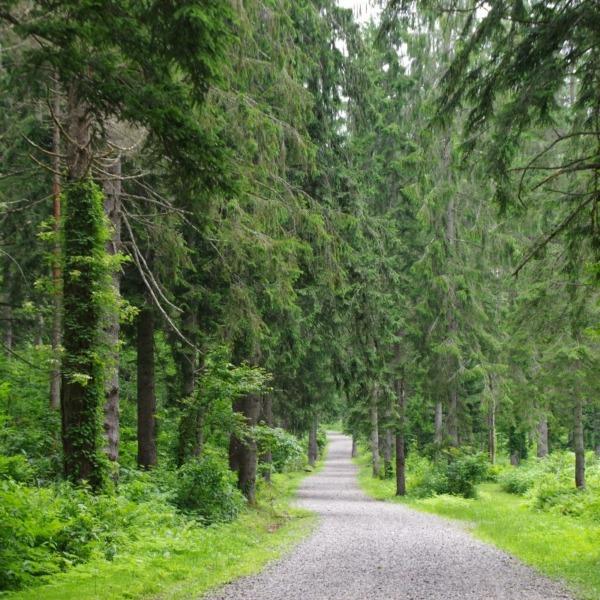 「ドイツトウヒの森」