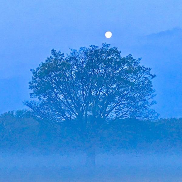 老木と満月